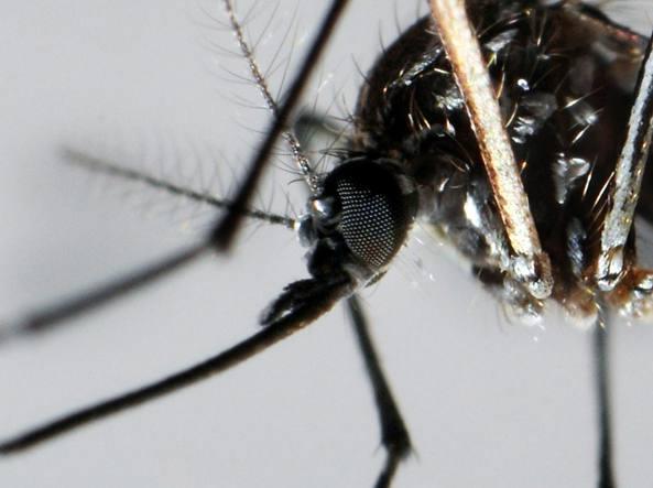 Brasile molti i casi di virus Zika provoca la microcefalia nei neonati