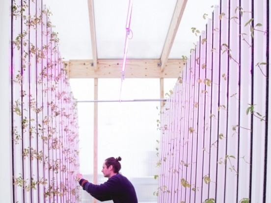 Impact Farm, in Danimarca in citta si produce verdura e frutta