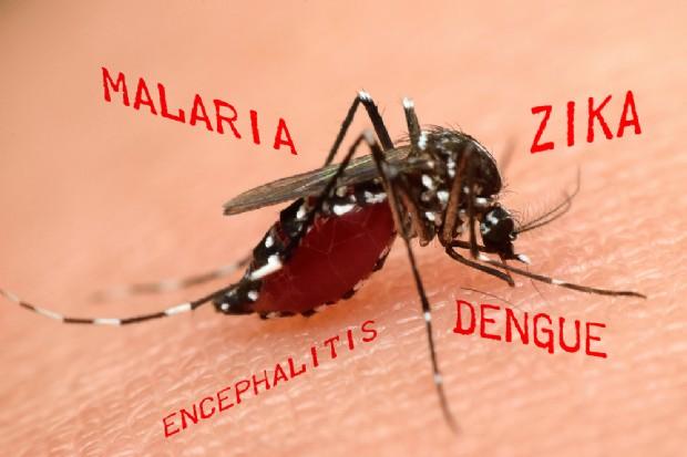 Virus-Zika-è-la-causa-di-altri-danni-cerebrali-potrebbe-arrivare-in-Italia