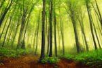Il-verde-è-in-aumento-sulla-Terra-rispetto-a-33-anni-fa-per-colpa-del-Co2