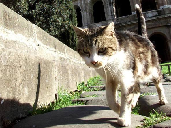 Razzi, pazza idea eliminare i topi a Roma con 500 mila gatti asiatici
