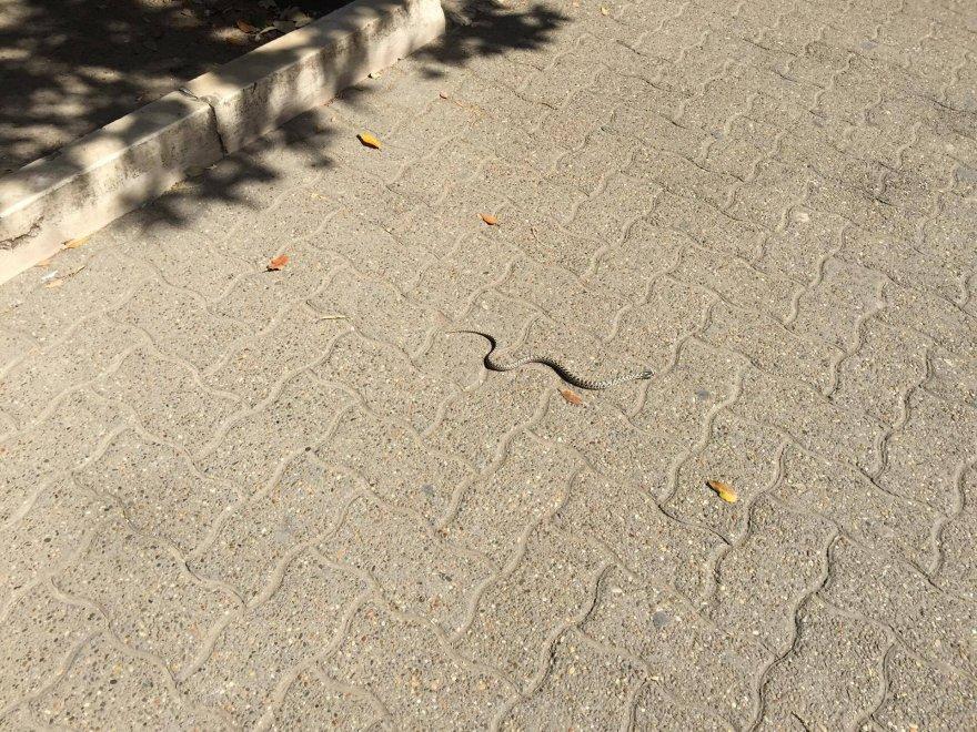 Bari, paura e curiosità per serpente avvistato in centro a Piazza Umberto