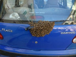 Molfetta choc per automobilista, ritrova il lunotto dell'auto sommerso da sciame d'api