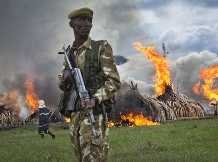 Kenya, il falò più grande del pianeta bruciate 105 tonnellate di avorio