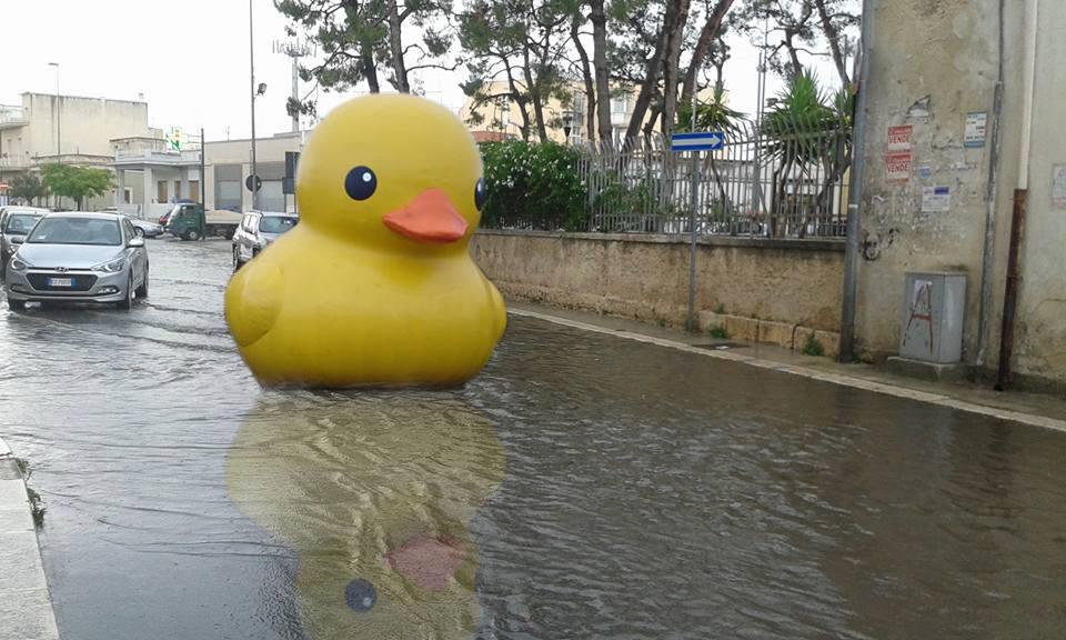 A Modugno avvistata papera gigante che galleggia nelle strade allagate della città