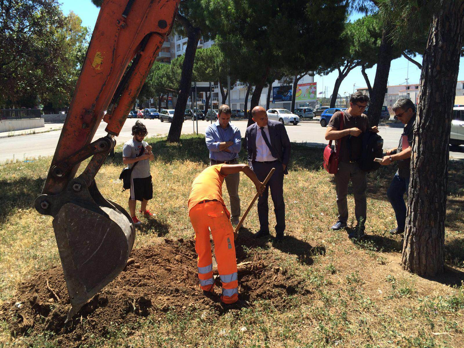Bari, i pini di via Caldarola non resisteranno all'espianto. Galasso: pensiamo a come compensare il verde