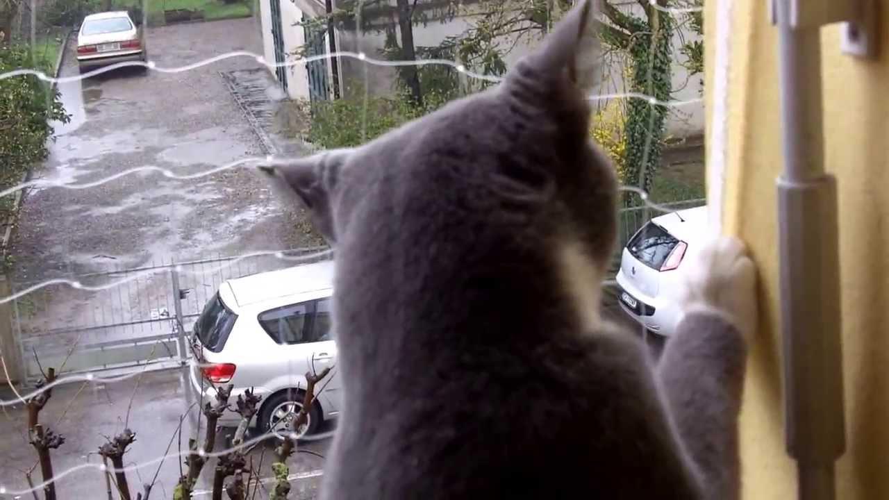 52enne per salvare il gatto cade dal balcone e muore dopo 12 giorni di agonia