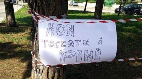 Bari, polemiche abbattimento pini in Via Caldarola, Carrieri attacca e chiede sostegno ai cittadini
