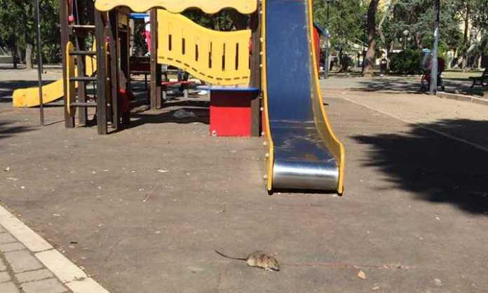 Bari è emergenza sanitaria, a Piazza Garibaldi avvistato un grosso ratto nelle vicinanze delle giostre per bambini
