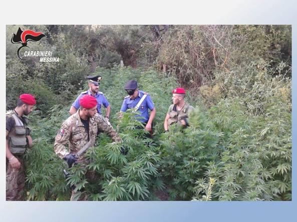 Assessore all'Agricoltura coltivava piantagione di marijuana. Arrestato