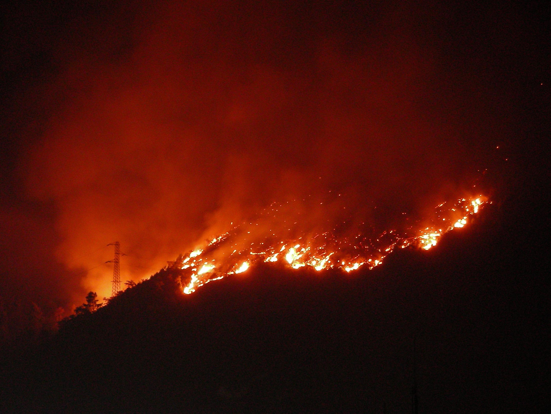 """Puglia, vastissimo incendio nel Parco dell'Alta Murgia: """"Il peggiore disastro ambientale della storia del parco"""""""