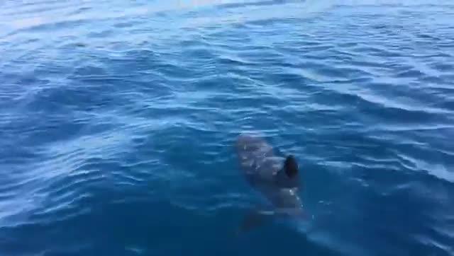 Puglia, nelle acque di un famosissimo lido avvistato uno squalo dai bagnanti