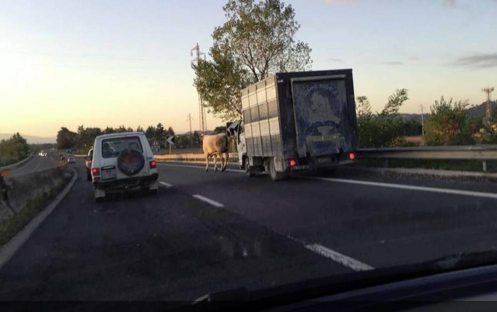 Bologna, code e traffico intenso in autostrada