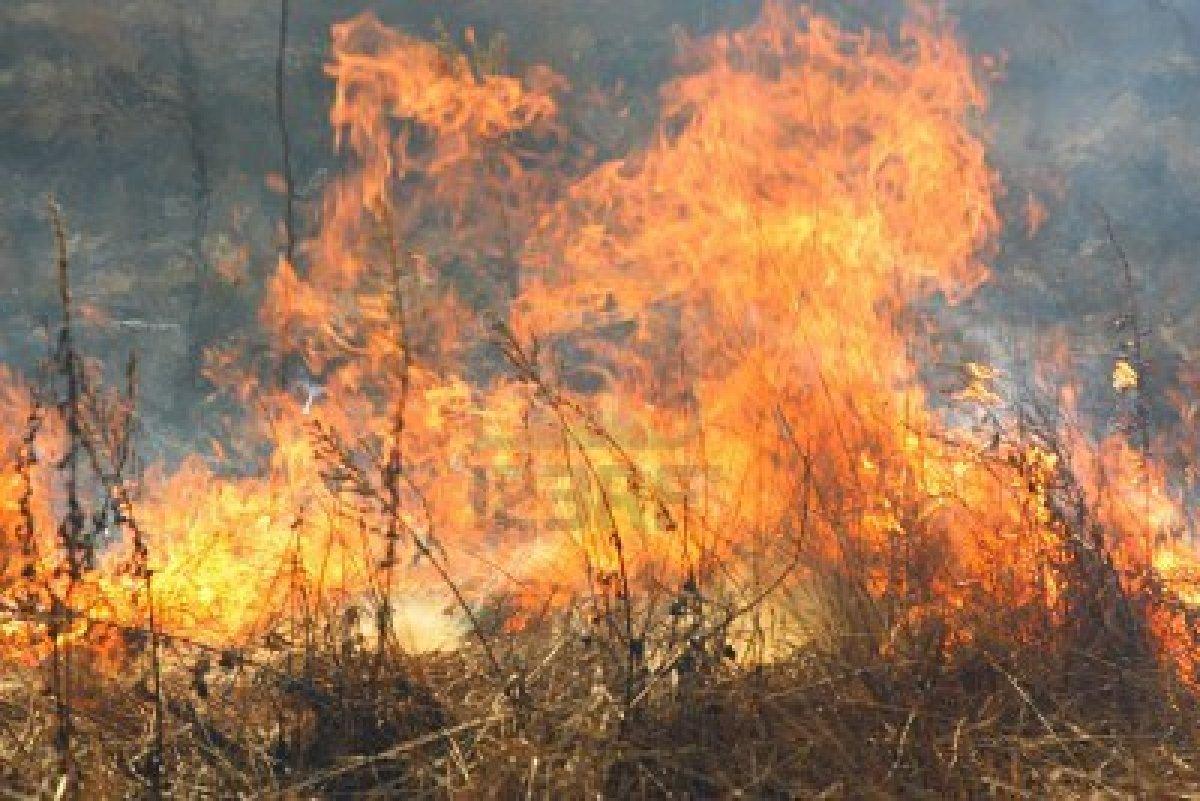 Bari, attimi di paura per spaventoso incendio nelle vicinanze del mercato ortofrutticolo sulla Statale 100