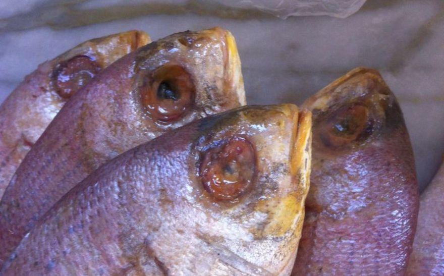 Pesce avariato al pranzo di nozze, un morto e 30 invitati intossicati, 17 ancora ricoverati