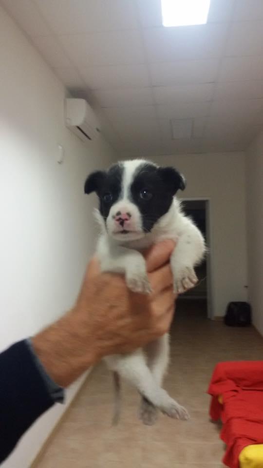 Bari, bellissimo cucciolo maschio gettato in un cassonetto dei rifiuti, l'ira del web