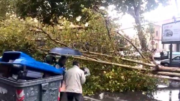 Bari tragedia sfiorata in viale della Repubblica, grosso albero cade su auto in corsa, illesi una donna e un bimbo di 7 anni