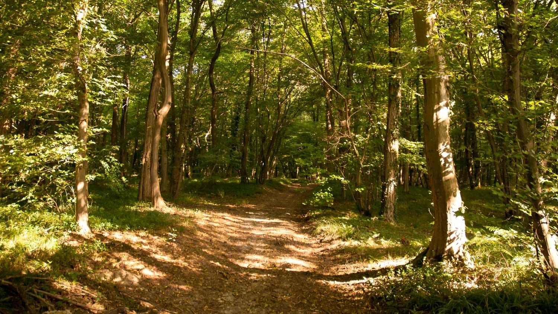Dal bosco spuntano soldi come funghi: cacciatore trova diecimila euro in contanti