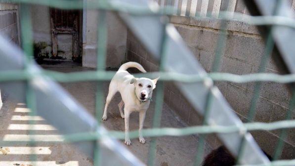 Albergatrice lascia in eredità 4 milioni di euro ai cani randagi