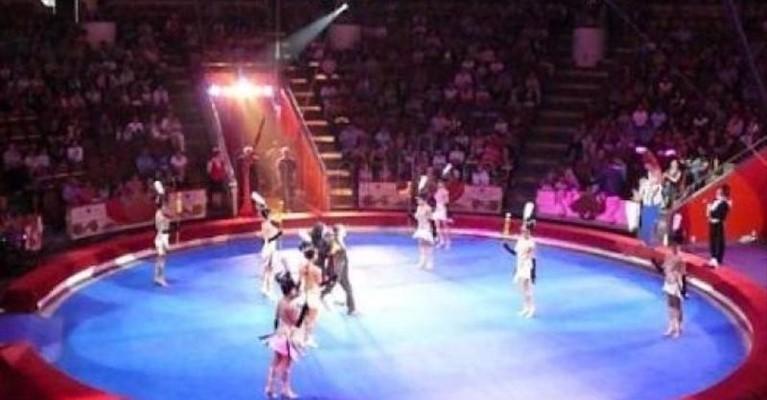 Puglia, al circo Orfei tremendo incidente, giovanissima contorsionista 15enne cade da quattro metri, è gravissima