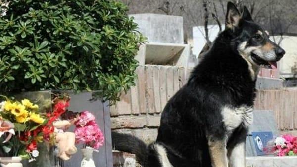 Addio a Capitan, il cane che per 10 anni ha vegliato sulla tomba del padrone