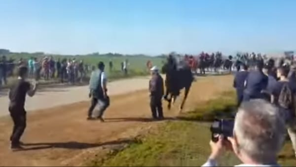 Puglia, durante manifestazione morto uomo travolto da cavallo, terrore tra i partecipanti