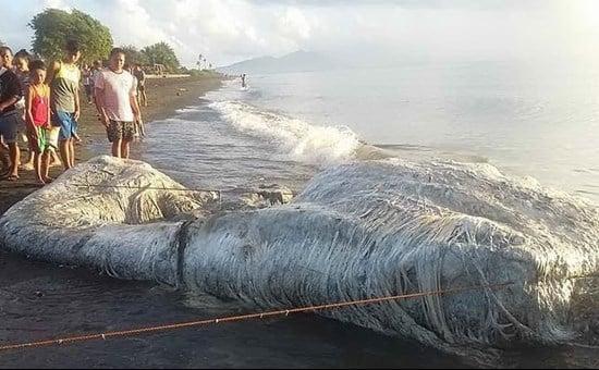 Mostro marino o balena, strano ritrovamento sulla spiaggia nelle Filippine/ Video, cos'è?