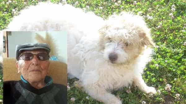Muore e lascia un milione di euro in eredità al cane che gli salvò la vita
