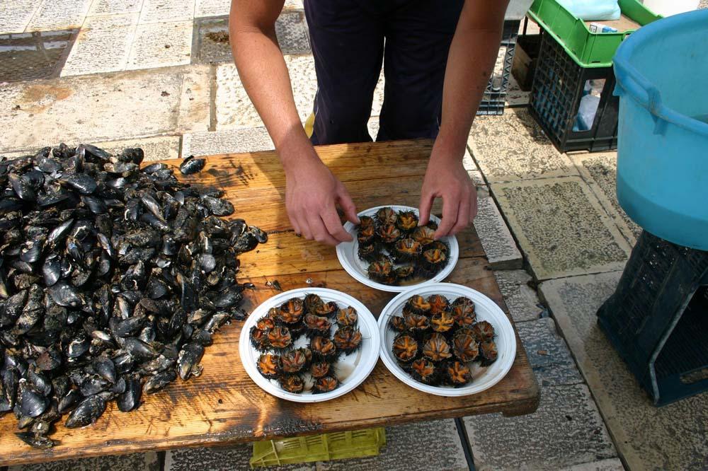 I ricci di mare proteggono il cuore. Dal mare nuove prospettive per la cura e la prevenzione dei disturbi cardiovascolari