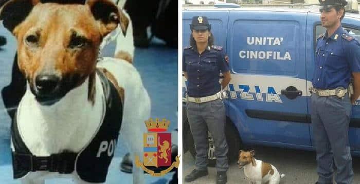 Napoli, la camorra ha condannato a morte Pocho, il famoso cane terrore degli spacciatori, su cui pende una grossa taglia
