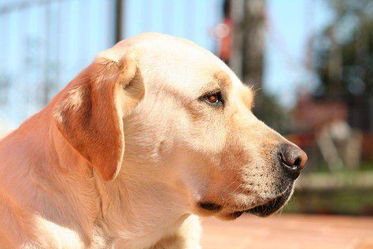 Simon cane–eroe salva dalla morte sicura tre bambini, allontanando un serpente velenosissimo