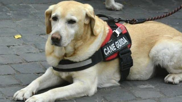 Non vedente si fa accompagnare in chiesa dal suo cane guida ma il parroco lo rimprovera non gradendo la presenza dell'animale