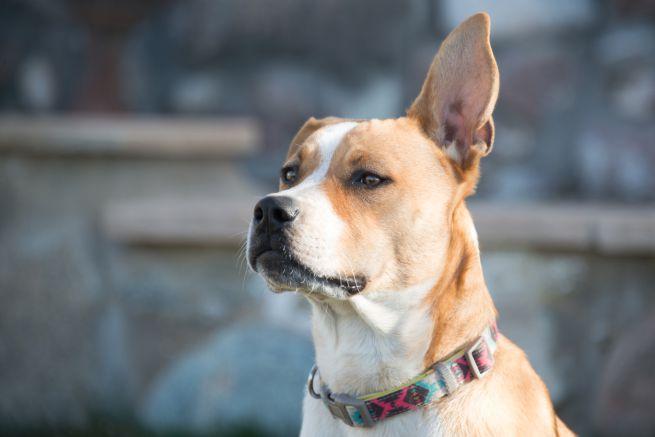 Donna malata di cancro, si salva grazie a Sierra, il suo fedele cane