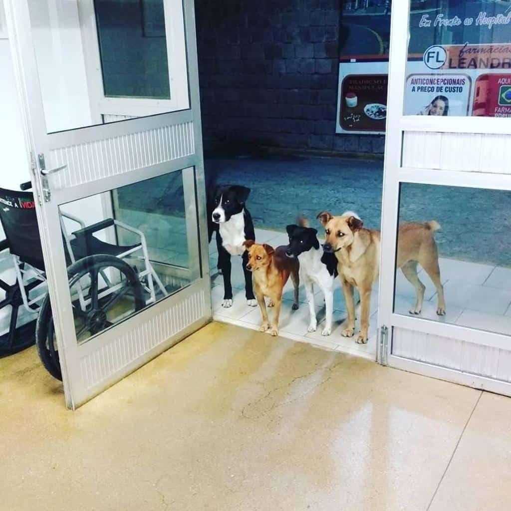 Senzatetto non si sente bene ricoverato in ospedale, i suoi quattro cani randagi lo aspettano da giorni fuori la porta
