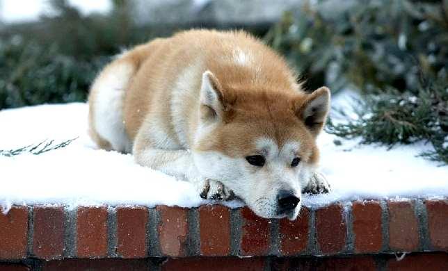 Come Hachiko, il suo padrone muore in ospedale, il suo cane lo aspetta all'uscita da tre anni