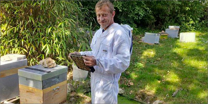 Apicoltore riesce a far produrre alle sue api miele alla marijuana
