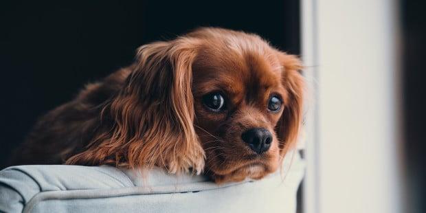 Donna perde il suo cane e come ricompensa per chi lo troverà offre la sua casa che vale 580.000,00 euro