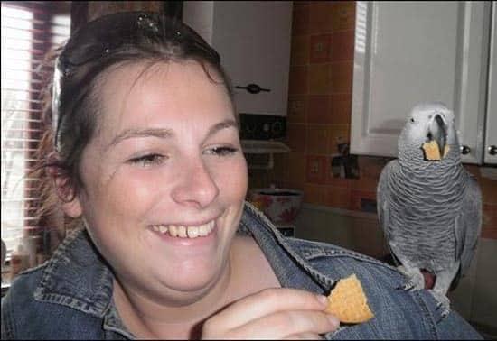 Moglie scopre il tradimento di suo  marito grazie al su pappagallo molto loquace, la reazione della donna è tremenda