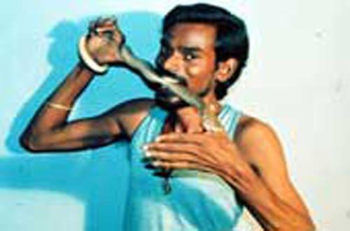 Strana dieta, un uomo da 28 anni mangia un serpente al giorno, sa di latte appena munto