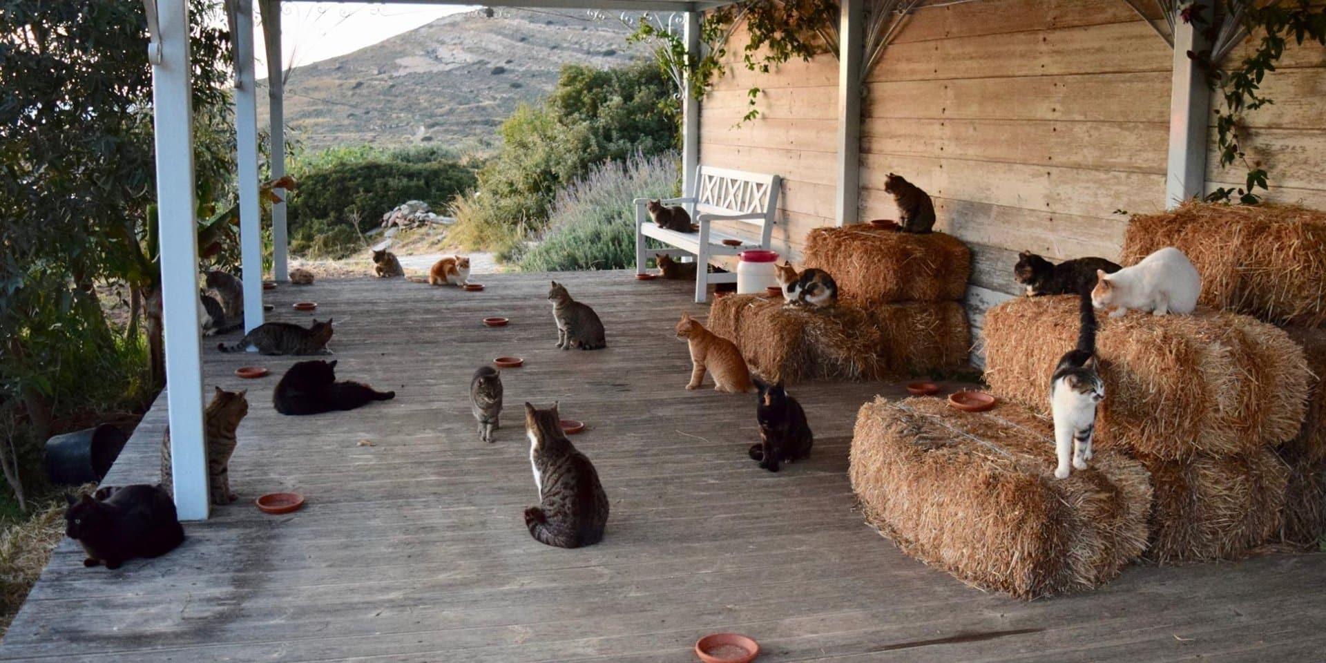 Matrimonio singolare, gli sposi alla loro festa non invitano nè amici né parenti ma solo 1.100 gatti