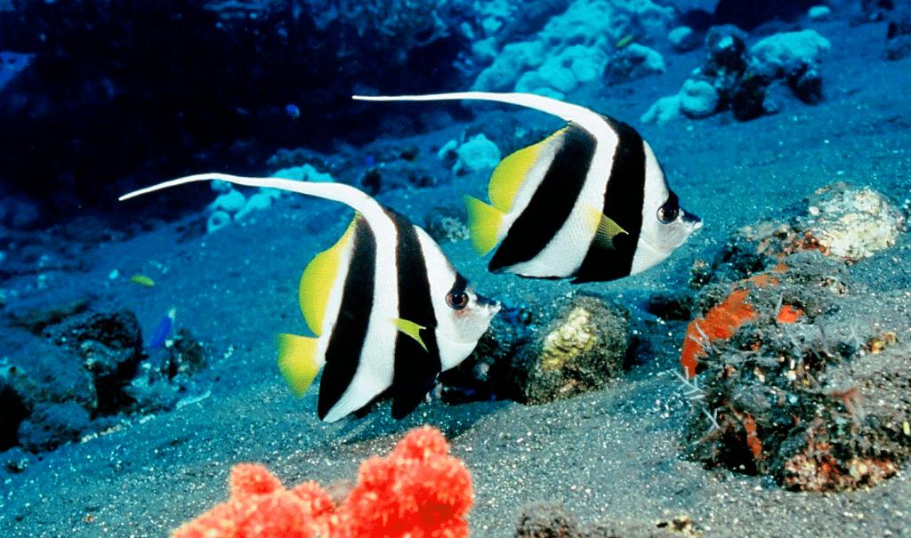 Negozio di acquari ordina pesci tropicali online e nel locale gli arriva un cadavere di un uomo