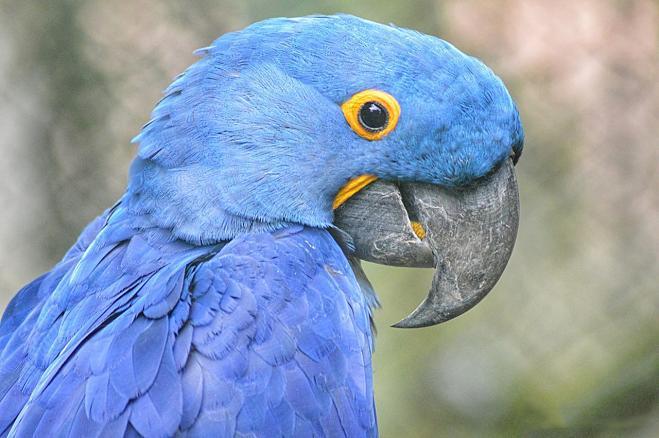 Tradisce la moglie con una giovane amante, la moglie lo scopre grazie a una spia, il loro pappagallo