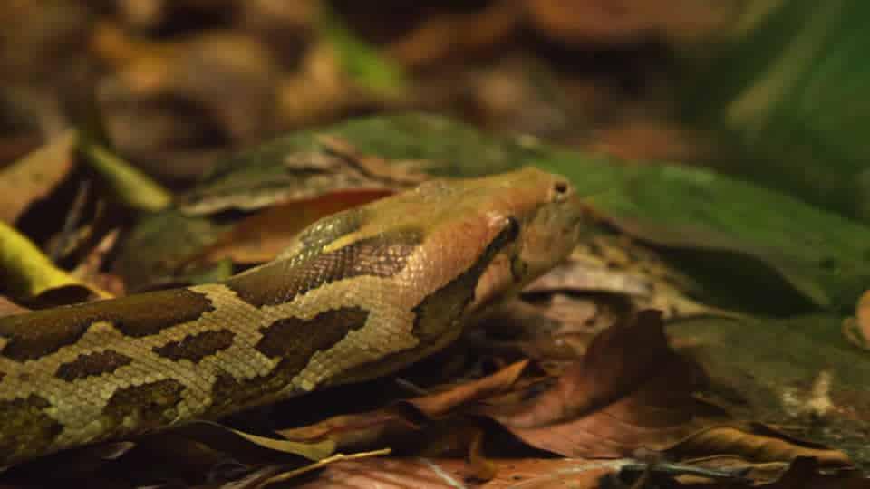 Morsa nel sonno da un serpente la mattina dopo allatta la figlia, tutte e due fanno una fine orribile