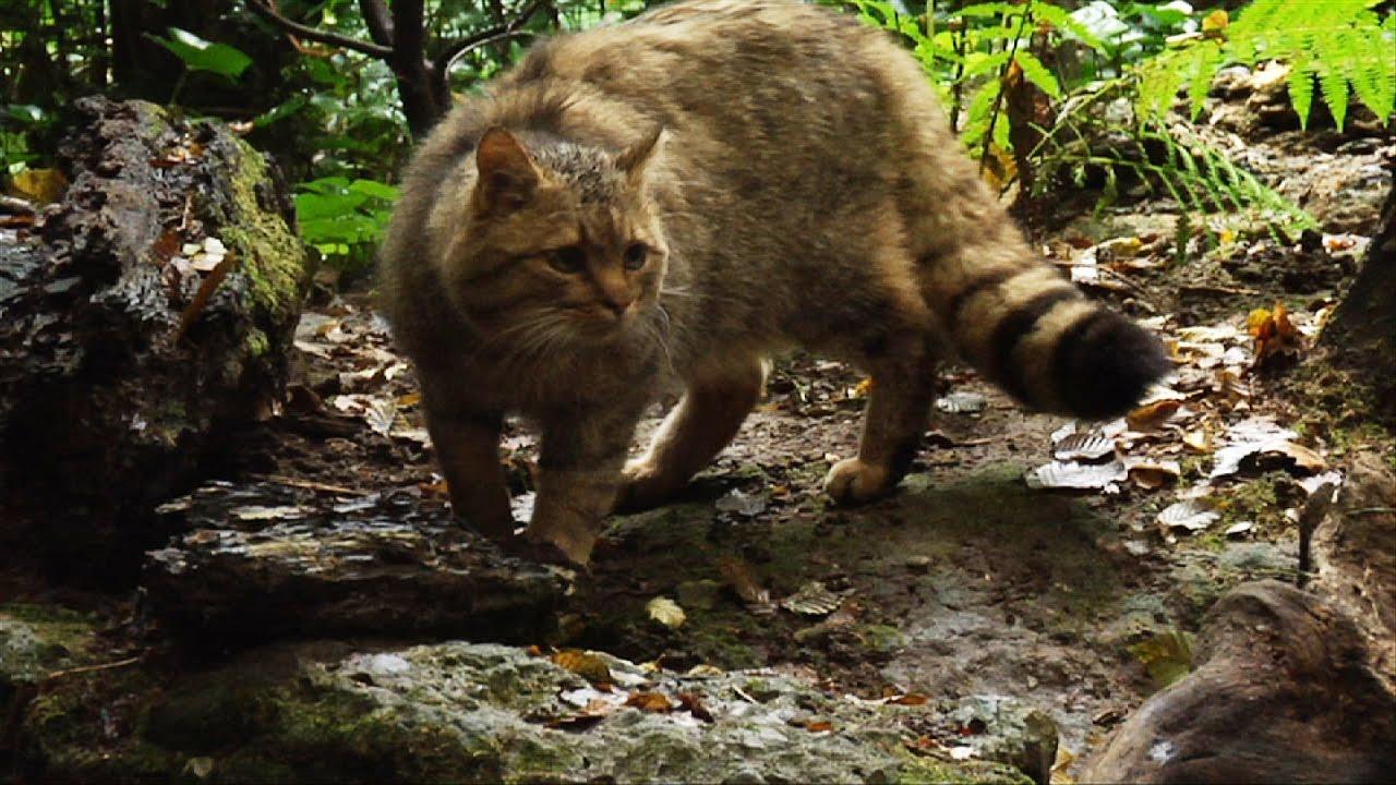 Escursionista per tre settimane si perde in un bosco, sopravvive alle rigide temperature grazie a un gatto