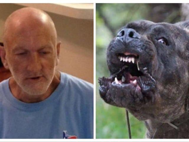 57enne scompare nel nulla, dopo alcuni mesi la verità, l'uomo era stato mangiato dai suoi 18 cani
