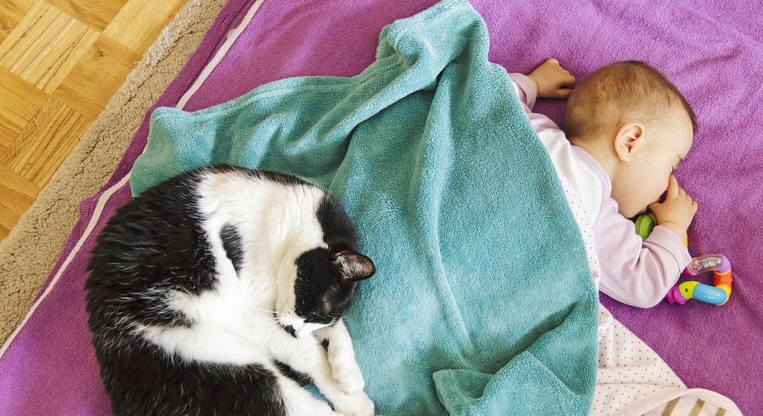 Gatto sale nella culla e copre con il suo pelo il neonato, cosa accade dopo è sconvolgente