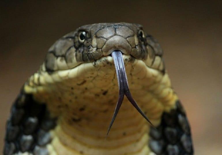Cattura un serpente che lo morde, lui azzanna il serpente, quello che succede dopo è impensabile