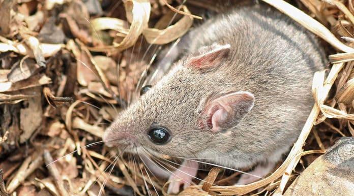 Donna incinta beve veleno per topi, cosa accade dopo è tremendo