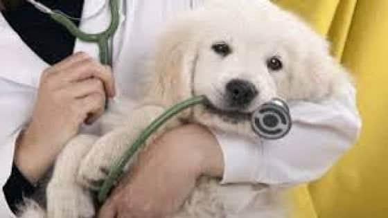 Opera il cane e poi al risveglio dall'anestesia lo tiene in braccio per le coccole, il veterinario dolcissimo che impazza sul web
