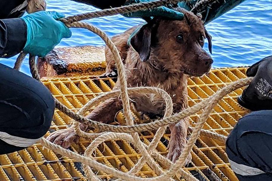 Trovano una cagnolina a 200 chilometri dalla costa, mistero come abbia fatto ad arrivare fin li